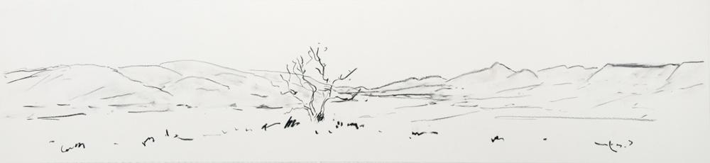 Lone-Tree-2010-15-x-48-Charcoal-paper